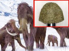 絶滅した「マンモスの毛」で作った111万円のニット帽