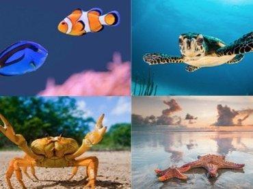 """【心理テスト】好きな""""海の生き物""""を選んでわかる「あなたが失敗する理由」が超当たる! ピンチに陥らないために… Love Me Doが指南!"""