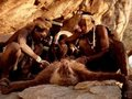 1万年前の暮らしを続ける「ハッザ族」の写真が超カッコイイ! 捕獲したヒヒを八つ裂き、究極ワイルドライフの実態とは!?