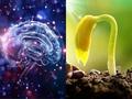 【衝撃】3人の僧侶が祈った水が植物の成長をスーパー促進! ついに波動の実在が大学研究で証明される=台湾