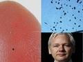 【速報】「もうすぐ悪魔の塵・スマートダストがばら撒かれる」Wikileaksアサンジが警告! 世界中が危険に!?