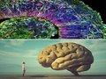 【世界初】研究室で培養された「ミニブレイン」から人間の脳波が確認される! 現在は未熟児レベルだが、今後成長か!?