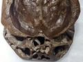 """【衝撃】有名SF作家が「宇宙人の頭蓋骨」を緊急公開! 精密科学分析で""""4億年前の地球外生命体""""と確証、DNAテストも…!"""