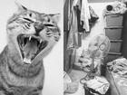 【実録】ボロ雑巾のような死骸…「ペット虐待物件」の闇を不動産執行人が語る! 事故物件よりもウツになる「暗黒物件」シリーズ