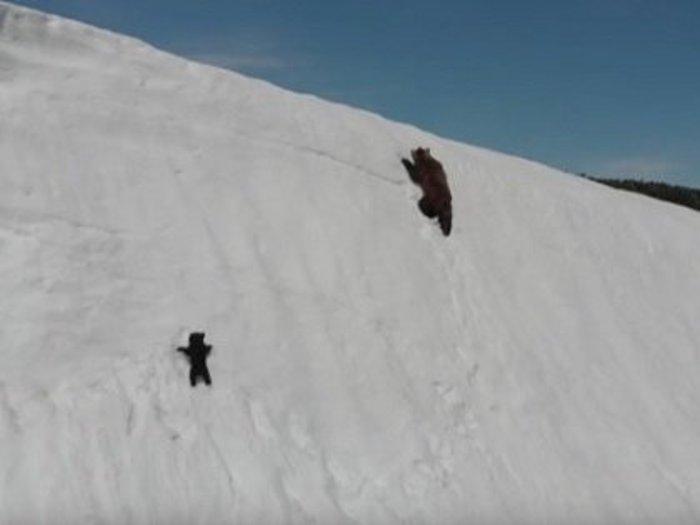 """【感動】雪山の急斜面をクマの親子が登る""""3分映像""""の緊迫感がスゴイ! 自然の脅威・勇気・希望・愛・忍耐の全部入り!"""