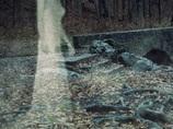 """【実録】「お母さん、白い服を着た足のない女の人がいるよ…」鹿児島の死臭が漂う""""火葬場跡地""""を取材、生焼けの遺体情報も...!"""