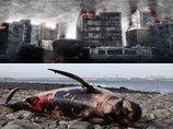 【激怒】「クジラの座礁は地震と関係なし」東海大の発表は間違っている! これでいいのか、徹底反論!
