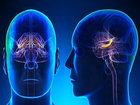 """「顔がデカい人=脳もデカくて地頭が良い」ことが判明! """"流動性知能""""に差… 長年の議論についに結論(最新研究)"""