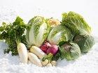 抗がん成分「イソチオシアネート」が本気でスゴい! 抗菌・動脈硬化予防も… どの野菜に含まれるか徹底解説!
