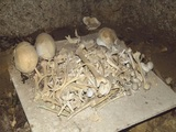今後「絶対に見ることができない頭蓋骨写真」を公開! ユタの儀式にも使われた沖縄の「風葬墓」に潜入取材!