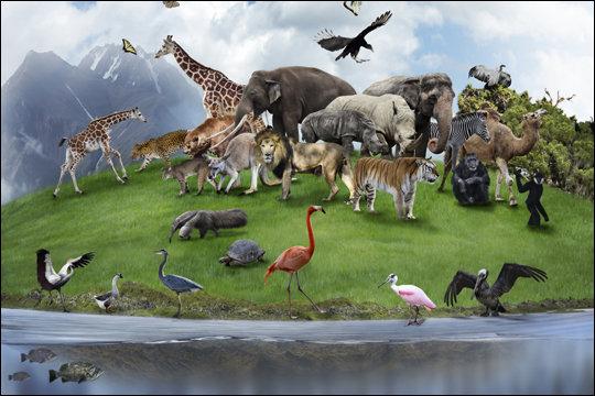 人類が絶滅した後、地球の支配者になる生物は何? 3つの意外な結果とは?の画像5