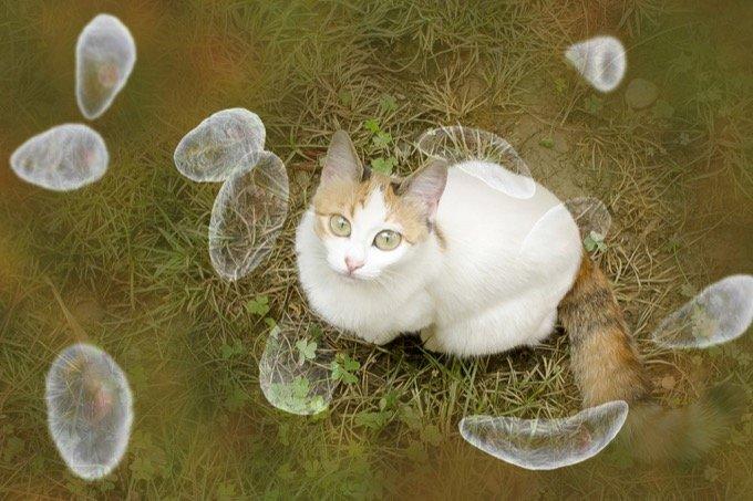 「ネコが統合失調症の原因になる」大学病院の論文が超話題に! 自殺、精神疾患とも関連…トキソプラズマ症の恐怖の画像1