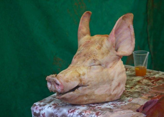 脳だけで生きる豚の実験成功、人間にも適応へ! 「水槽の脳」から意識のサインらしきものも確認される!の画像1
