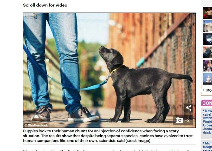 犬は生まれつき人間を 母親と同じように 信頼していることが判明