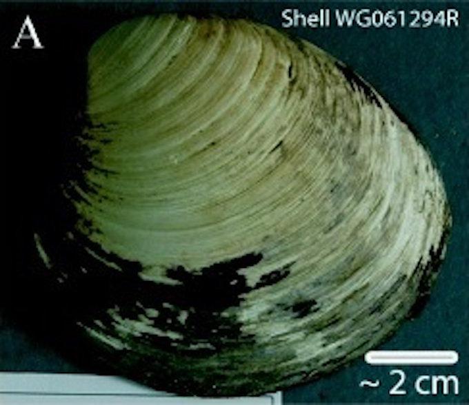2ページ目)200歳のクジラ、500歳の貝、2億歳の…!? 地球で最も長生きな ...