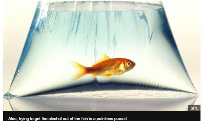 0817 goldfish-1.jpg