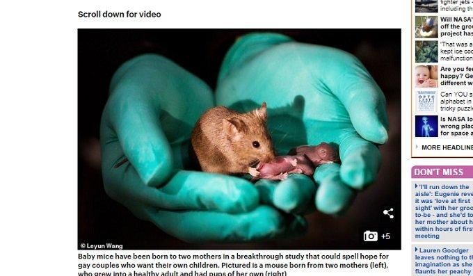 メス2匹だけで元気なマウスを作る実験に成功! オス2匹でも生まれたがすぐに死んだの画像1
