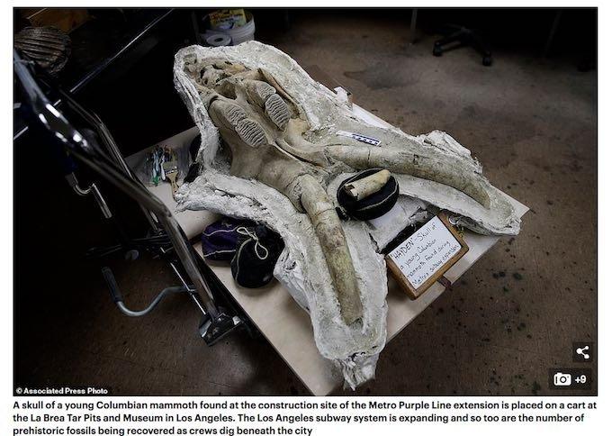 LAの地下鉄工事中に謎の「氷河期を生きた古代生物たち」が次々と発掘される! ウサギの顎やマストドンの前足も…!?の画像1