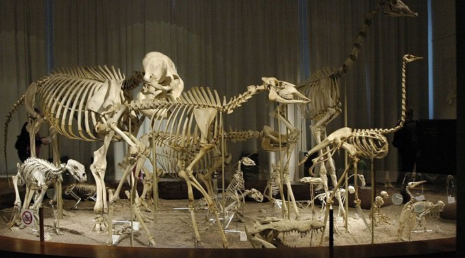 1280px-Animal_skeletons_at_Finnish_Natural_History_Museum_(elephant,_giraffe_etc).jpg