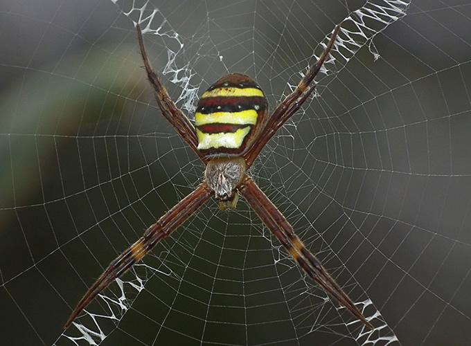 1510_spider_01.jpg