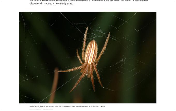 1511_spider_01.jpg
