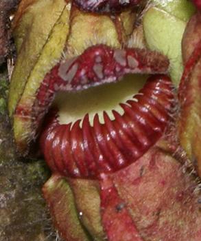1512_carnivorousplant_03.jpg