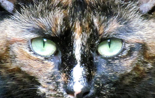 1602_cat_01.jpg