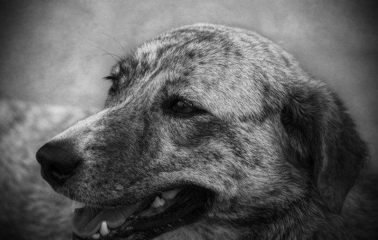 1602_dog_01.jpg
