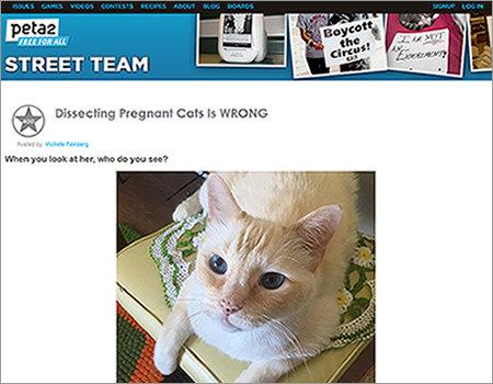 1609_cat_1.jpg