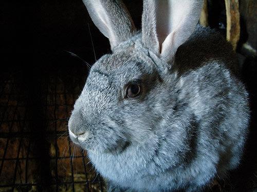 1609_rabbit_1.jpg