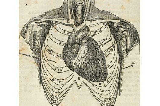 1703_heartoutsidebody_1.jpg