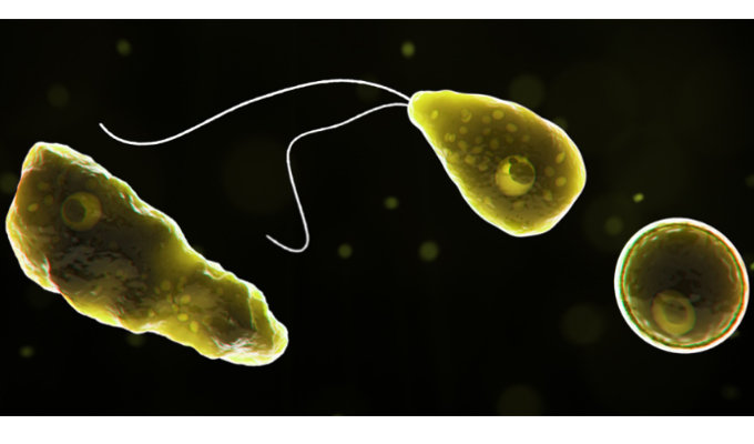 1706_bacterium_2.jpg