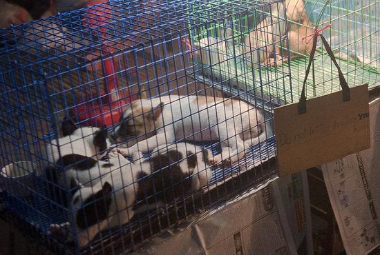 【閲覧注意】レトリバーらしき犬を生きたまま釜茹でにする超おぞましい光景!「キャン…キャン…」中国農村、犬食文化のリアルの画像1