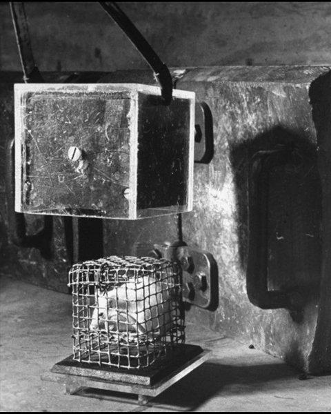 【閲覧注意】まるでゾンビかミュータント… 放射線を使った恐怖の動物実験写真5! 被爆ネズミの変わり果てた姿に驚愕の画像1