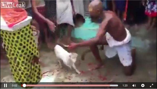 【閲覧注意】超速斬首オヤジの連続早業に震えが止まらない! 子ヤギの頭が次々に… 動物の生贄儀式は文化か虐殺か!?=インドの画像1