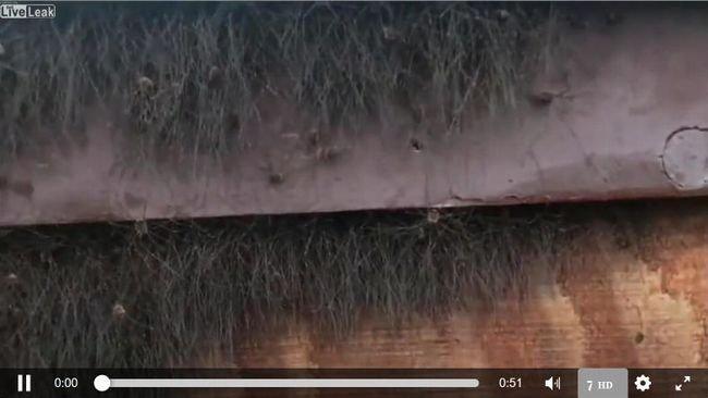 【閲覧注意】リアルまっくろくろすけの映像がキモすぎる! 窓枠からうじゃうじゃと… 鳥肌必至、最恐の生存戦略の画像1