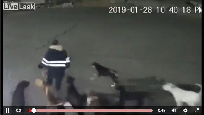 【閲覧注意】野良犬11匹に襲われ噛み殺された34歳女性! 全身ボロボロ、頭皮はぎ取られ… 直前映像も恐怖=メキシコの画像1