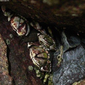 AlienCreature_2.jpg