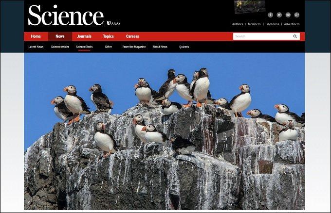 鳥の糞が北極の気温を下げていることが判明! 理学博士が緊急コメント寄せる「地球温暖化の阻止に…」の画像1