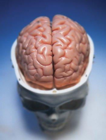 BrainPower_2.jpg