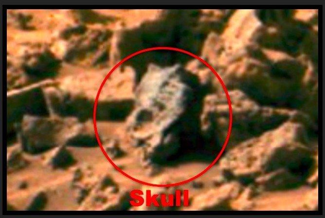 Dinosaur_skull20161102.jpg