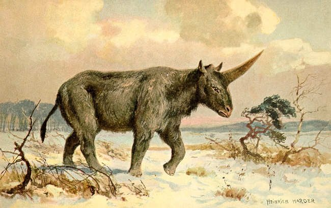 Elasmotherium_2.jpg