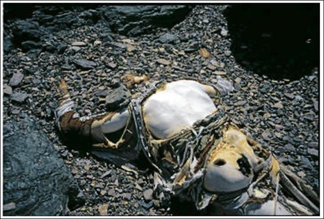 エベレストなどの山には放置遺体がかなり ...