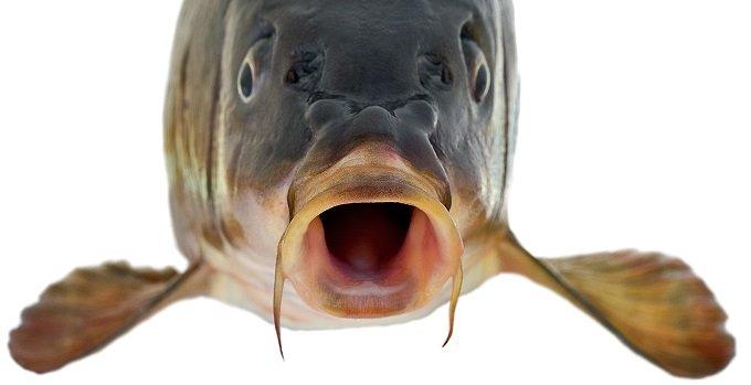魚顔なのに美女&イケメンな芸能人4選! 凹凸が少ない顔立ちと離れた目… 「それが魅力になってる」「骨格どうなってるの」の画像1
