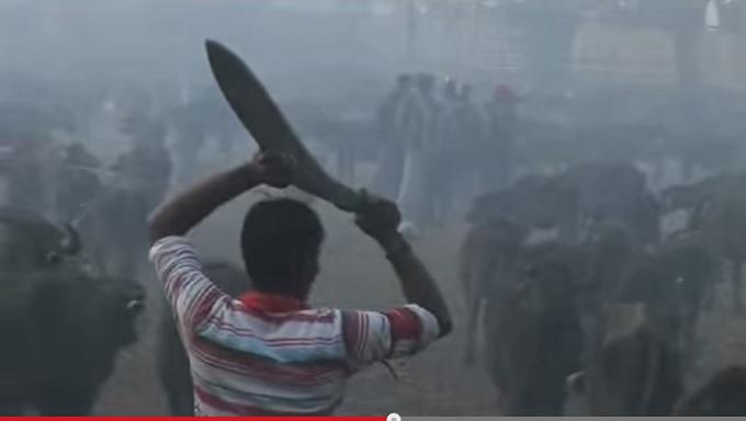 【超・閲覧注意】世界最大の斬首祭り!! 5年に一度の「ガディマイ祭り」が凄惨すぎる=ネパールの画像1