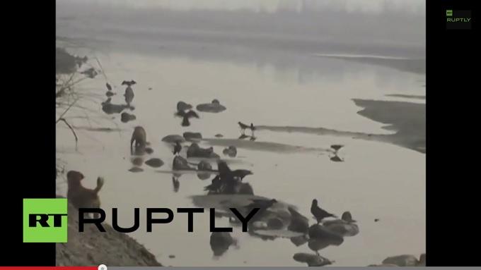 【閲覧注意】ガンジス川岸に少女30人以上の水葬遺体が…!! 残酷で神秘的なインドの光景の画像1