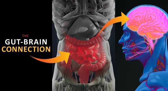 人間の感情は腸内微生物(腹の虫)に支配されていたことが判明! 「腸=第2の脳」は本当だった!の画像1