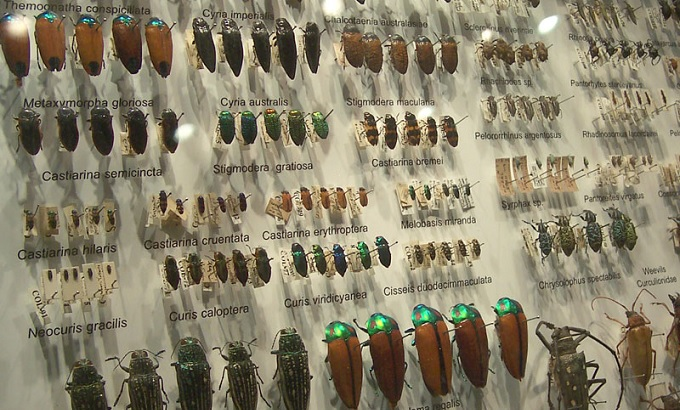 昆虫の正体はエイリアンだった?いま大注目の「昆虫宇宙起源説」を徹底解説!!の画像1
