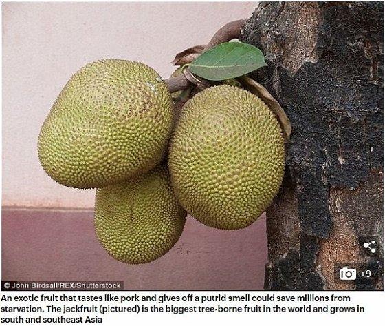 Jackfruit1.JPG