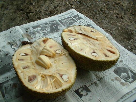 Jackfruit2.JPG
